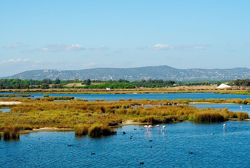 Ria Formosa, Algarve, Portugal